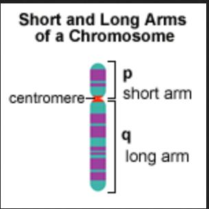 chromosome parm gene gametes